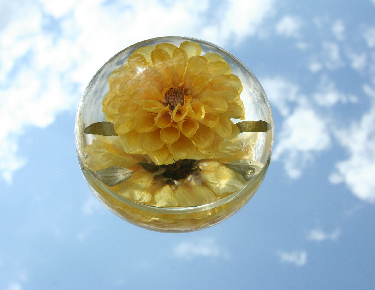 paperweight flower glass free photo
