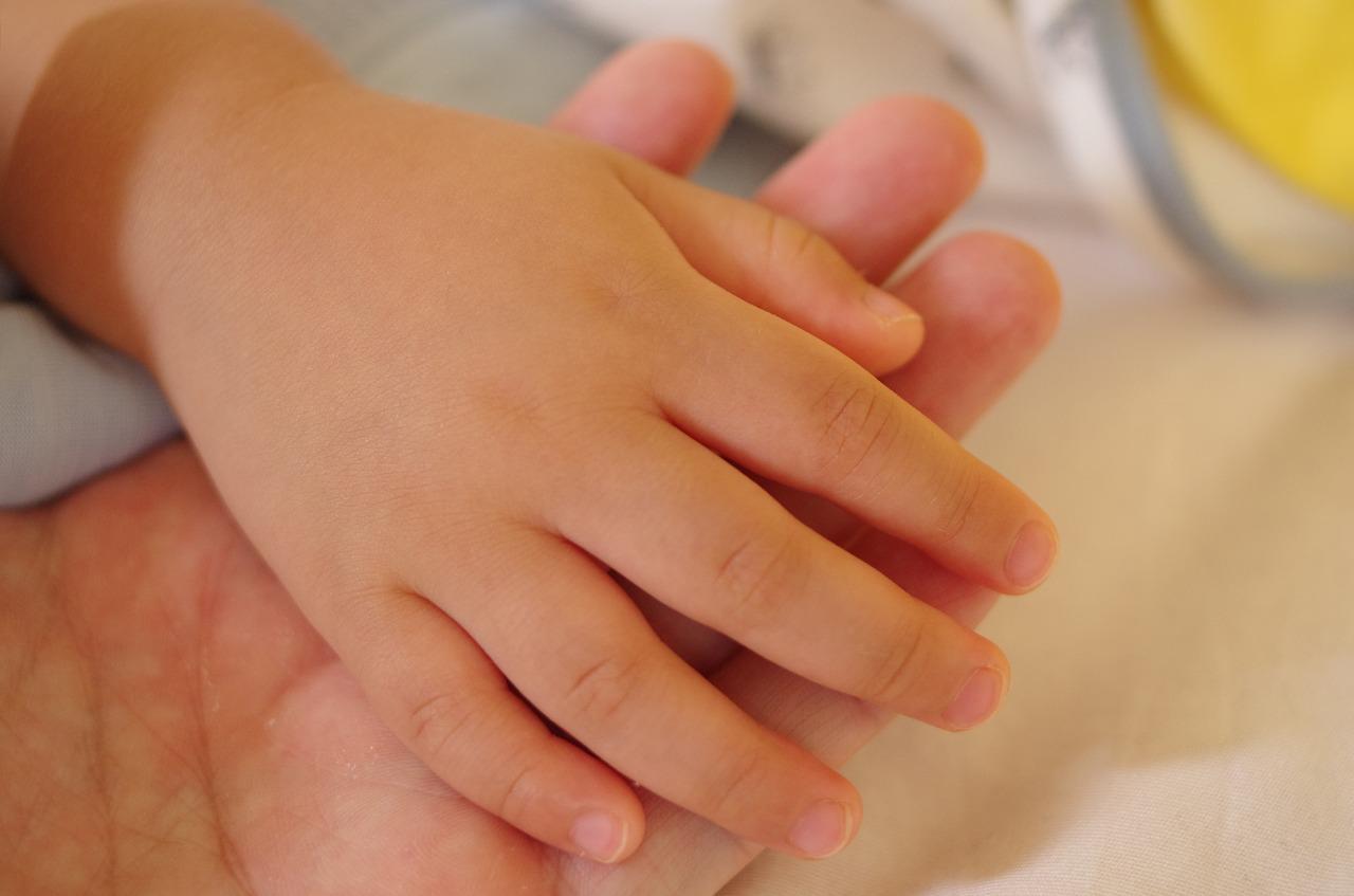 parenting hand love free photo