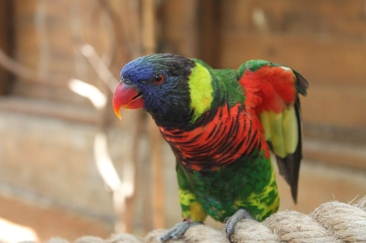 parrot animal red free photo