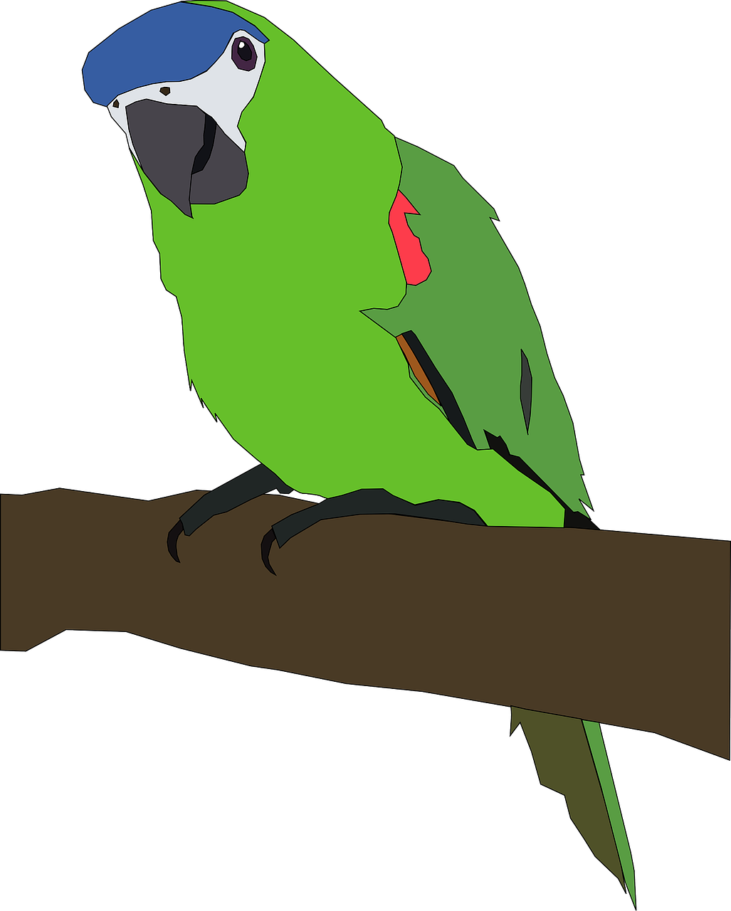 parrot tropical bird bird free photo