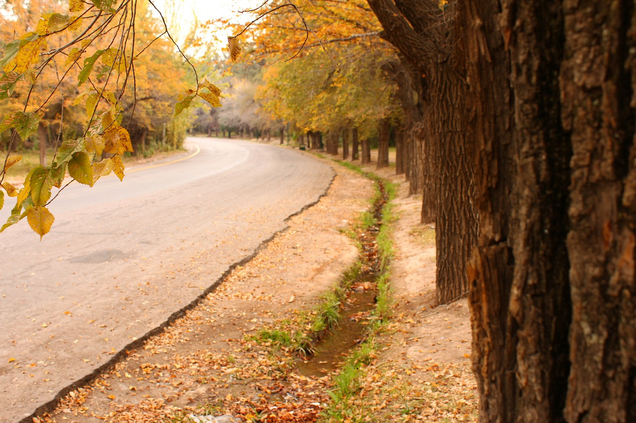 path,tree,leaf,autumn,dry leaf,leaves,dry,yellow,winter,park,street,curve,free pictures, free photos, free images, royalty free, free illustrations, public domain