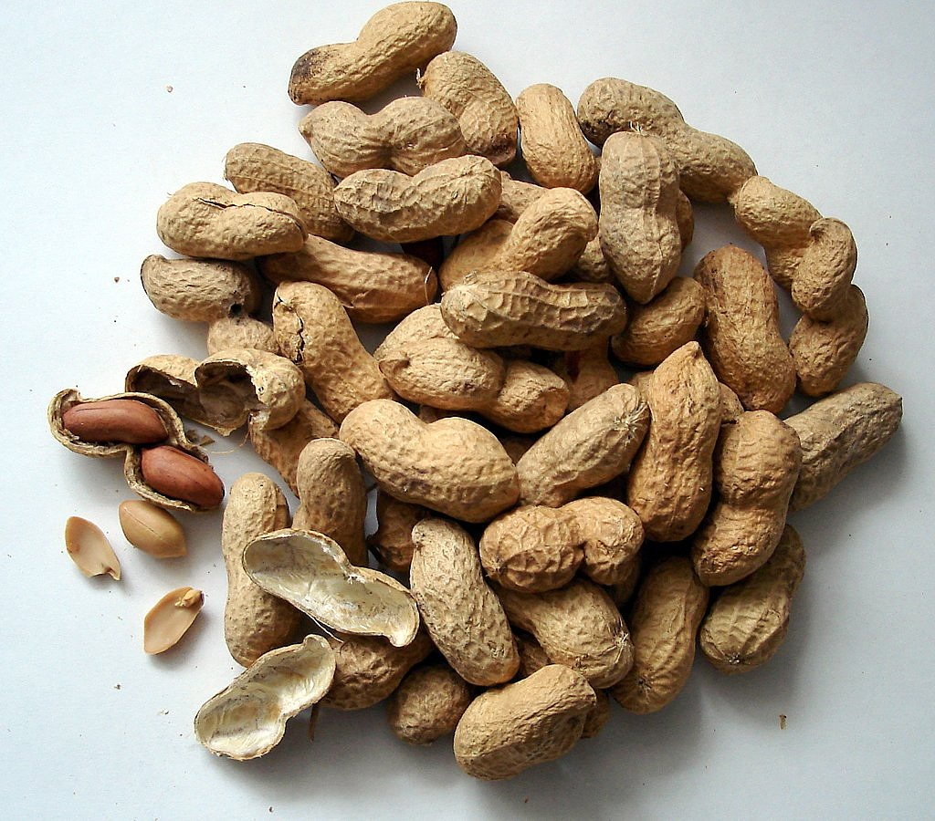 peanuts nuts cores free photo