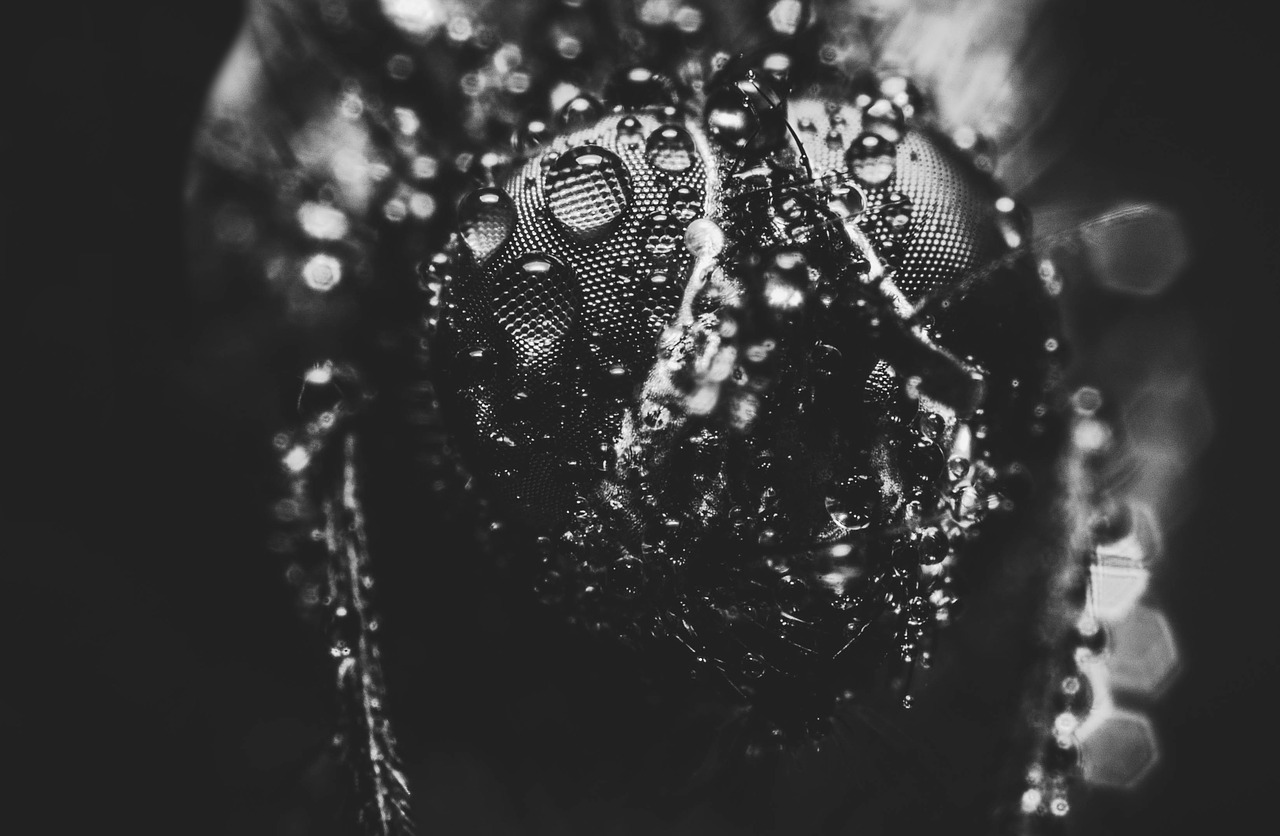 pearl,splash,black and white photography,wet,bubble,drop of water,black and white,droplets,macro,fly,animal,nature,black white,beaded,raindrop,rain,background,black and white recording,black,free pictures, free photos, free images, royalty free, free illustrations