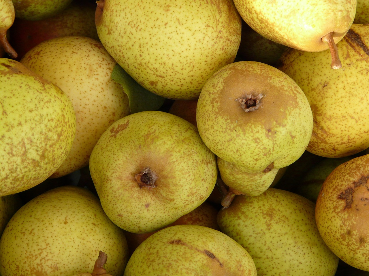pears fruits fruit free photo