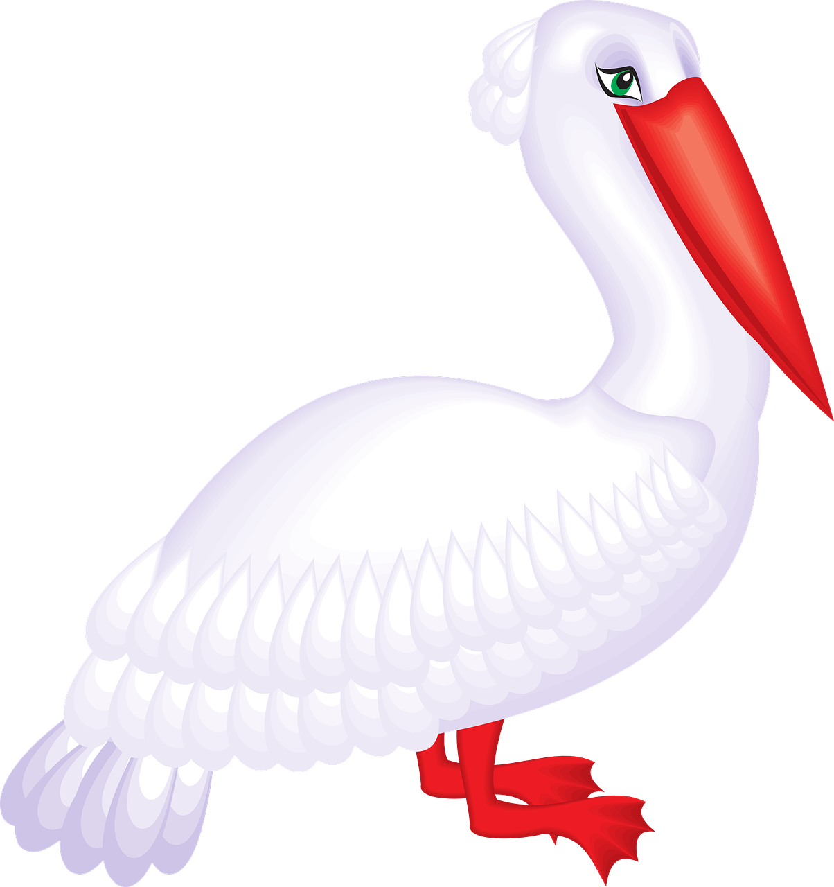 pelican,seabird,pelecanus erythrorhynchos,pelecanidae,free vector graphics,free pictures, free photos, free images, royalty free, free illustrations, public domain