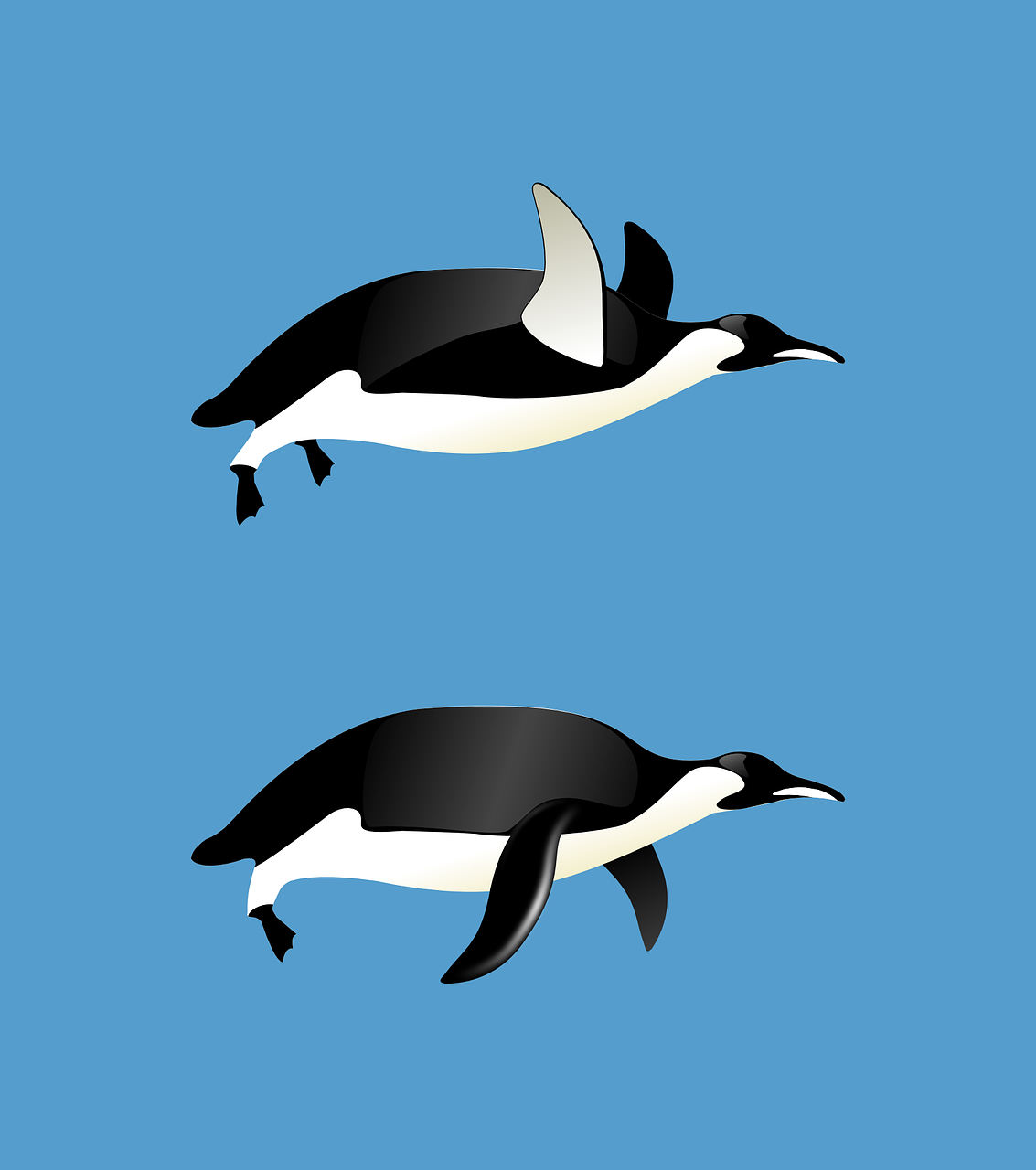 penguins flying animal free photo
