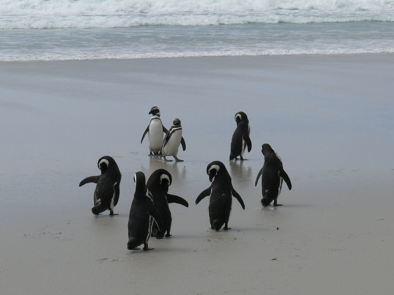 penguins antarctica southern ocean free photo