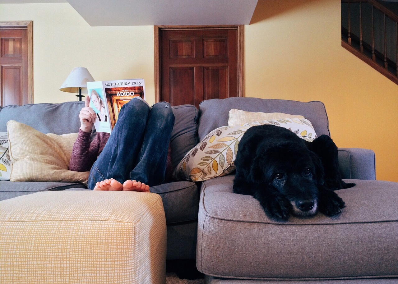 Person,home,relax,dog,lifestyle - free image from needpix.com