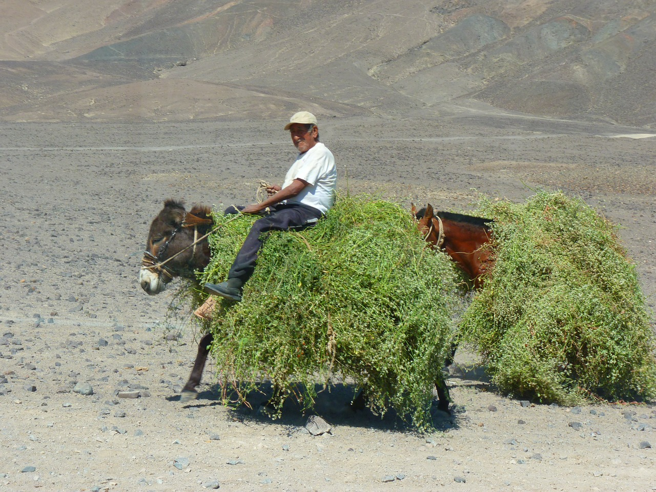 peruvians donkey packed free photo