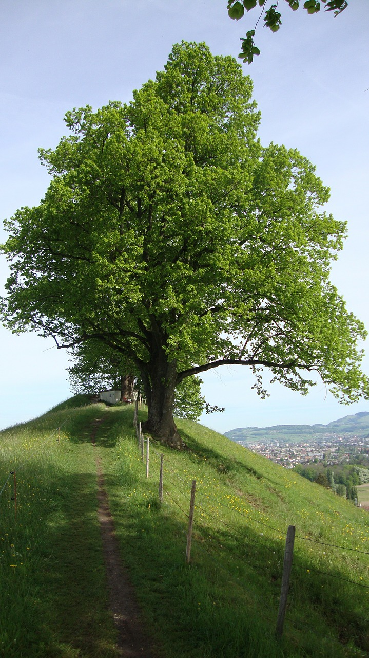 pilgrimage jakobsweg tree free photo