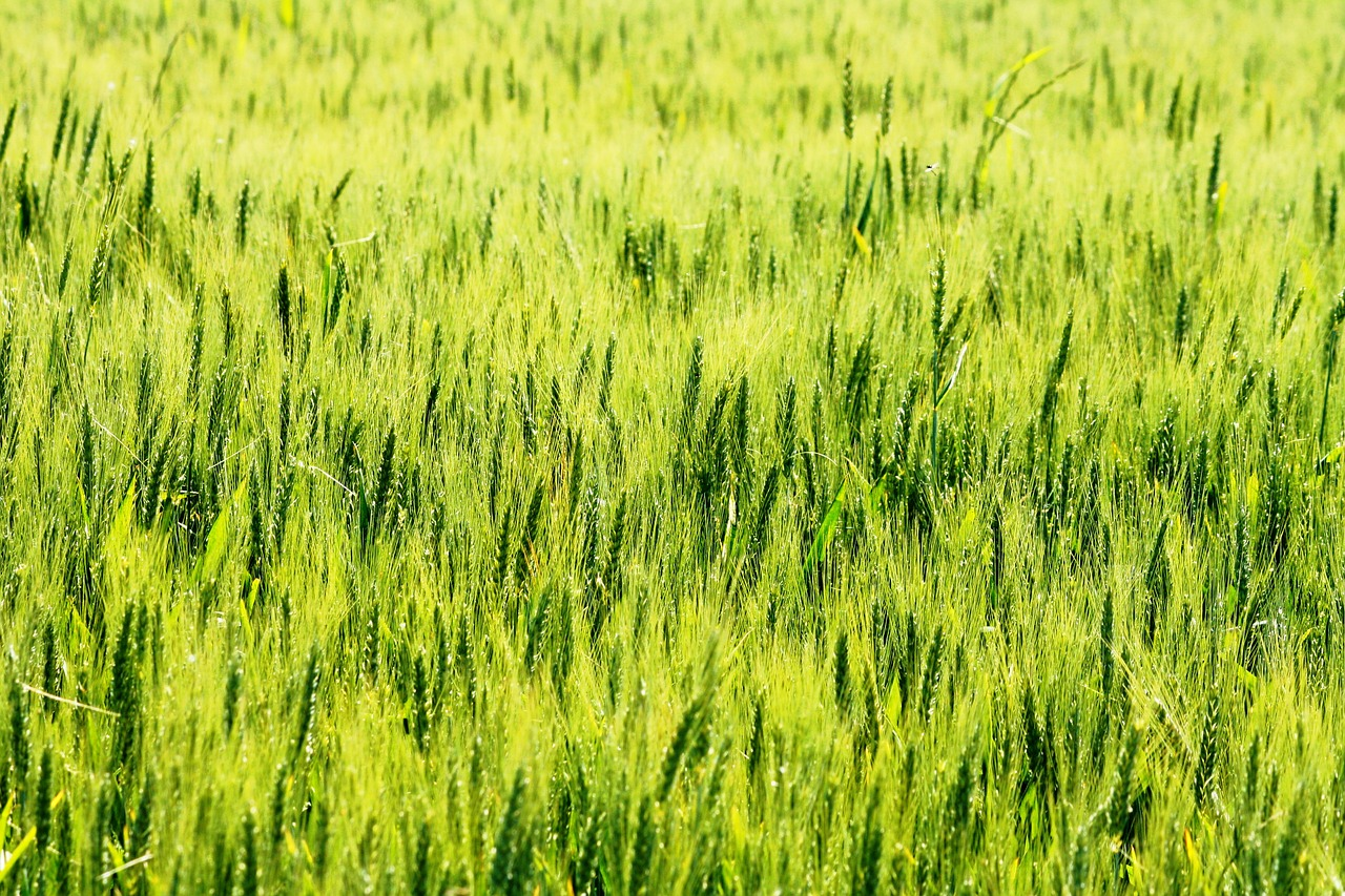 pin field,green,nature,free pictures, free photos, free images, royalty free, free illustrations