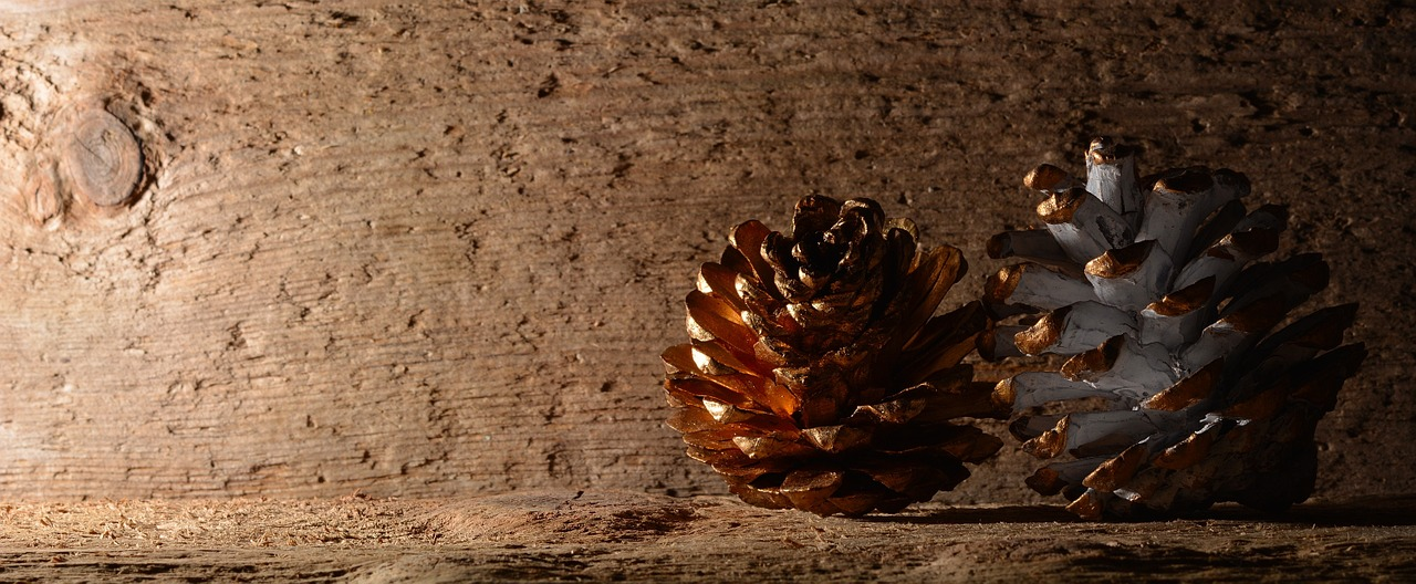 pine cones wood background free photo
