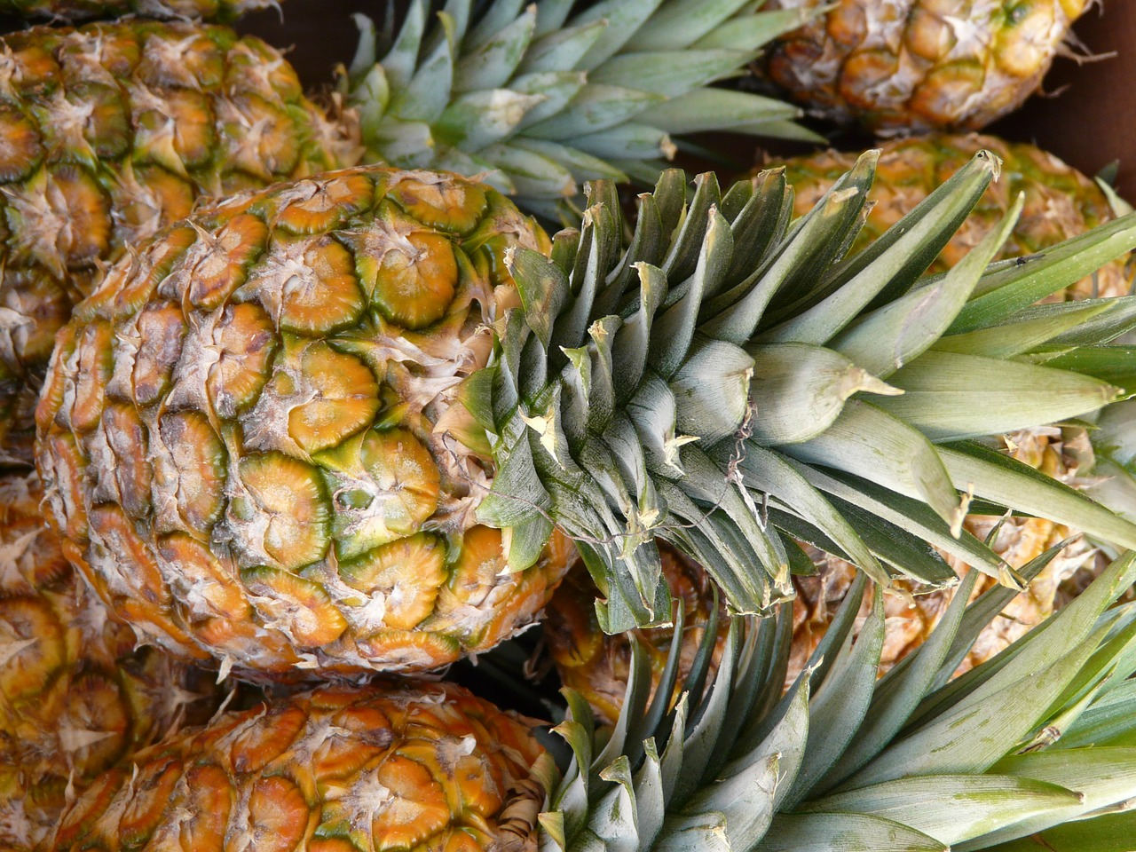 pineapple fruit sweet free photo