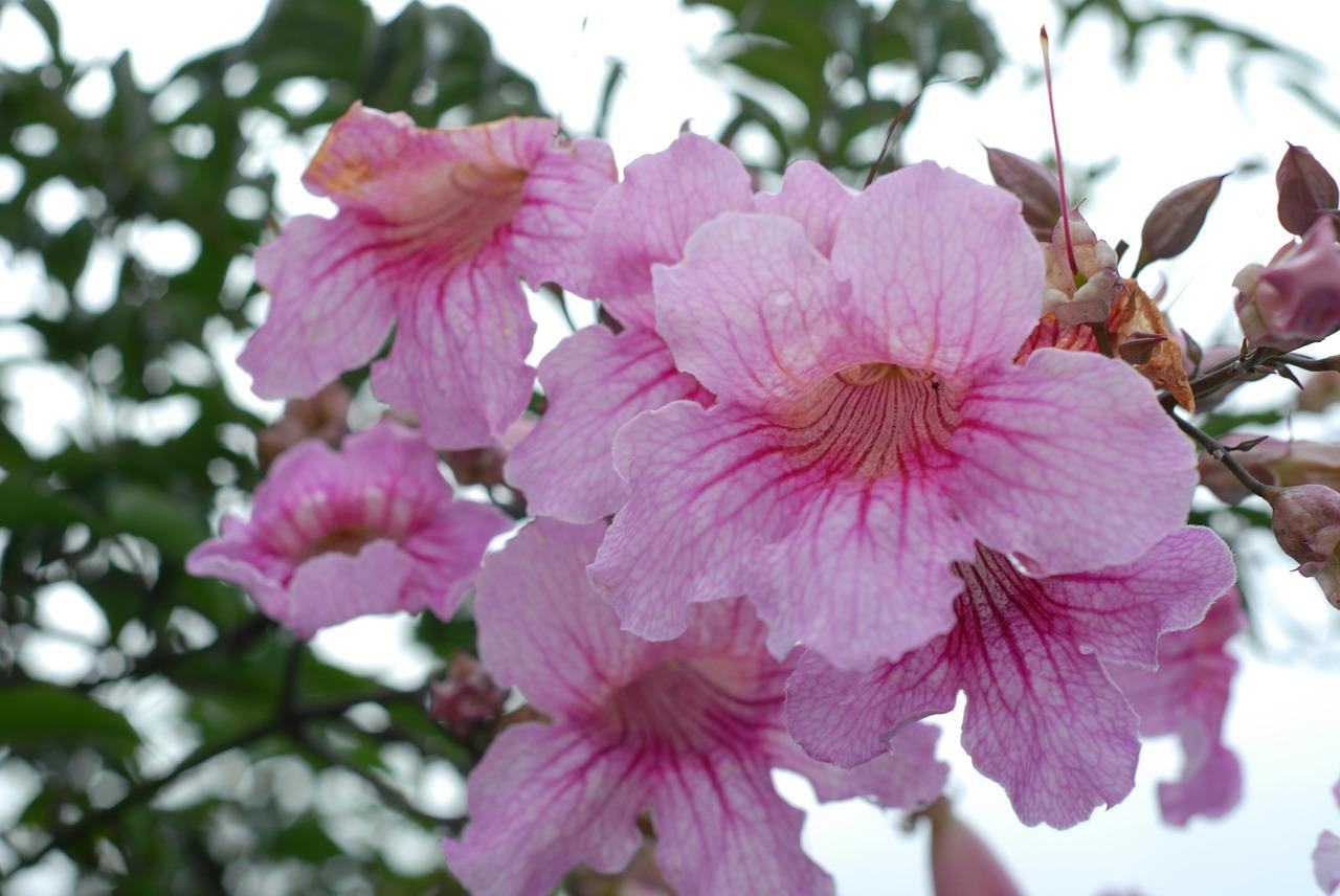 Pink flowerflowersspringfree photosfree images free photo from pink flower flowers spring mightylinksfo