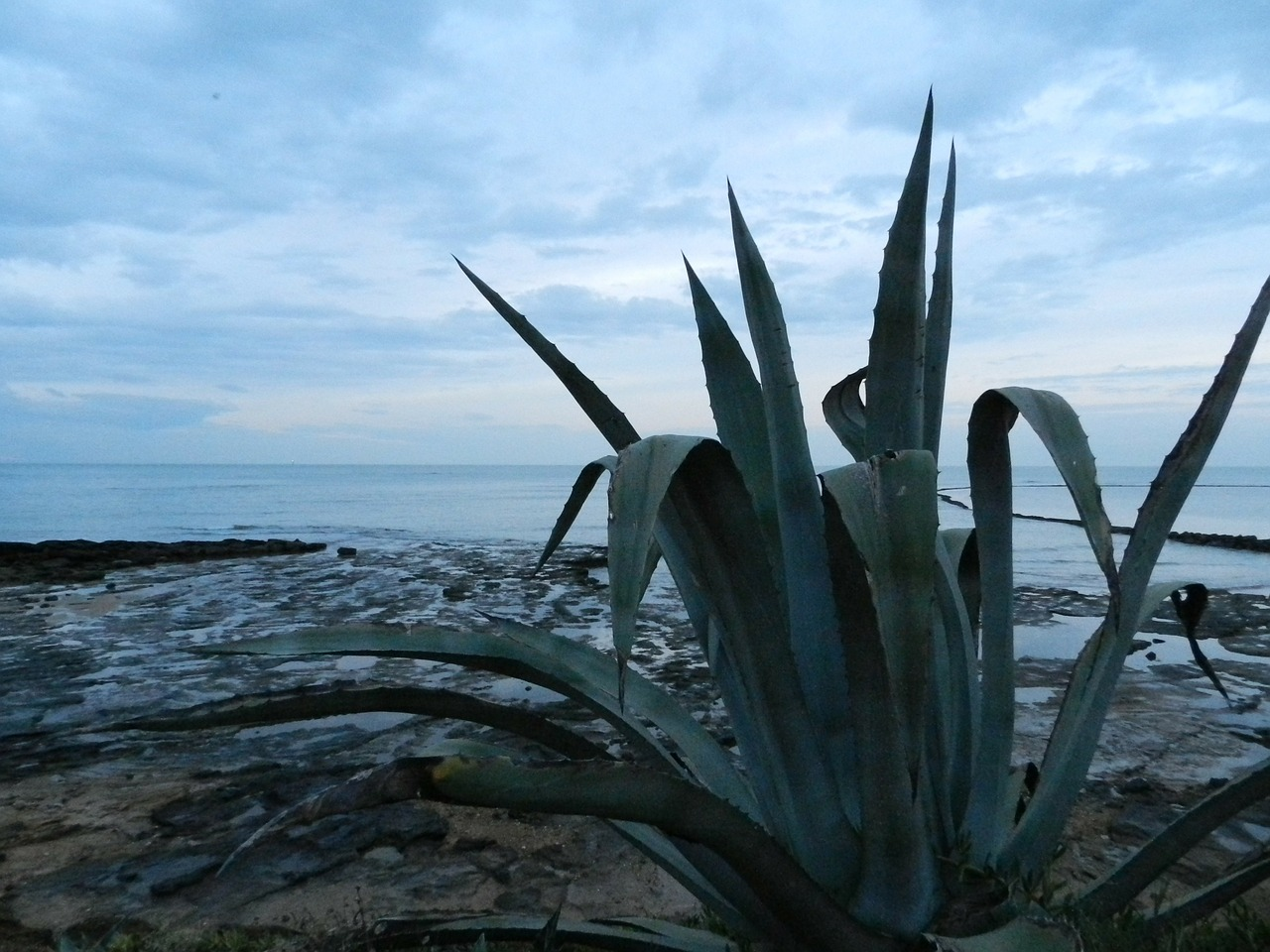 plant sea cadiz free photo
