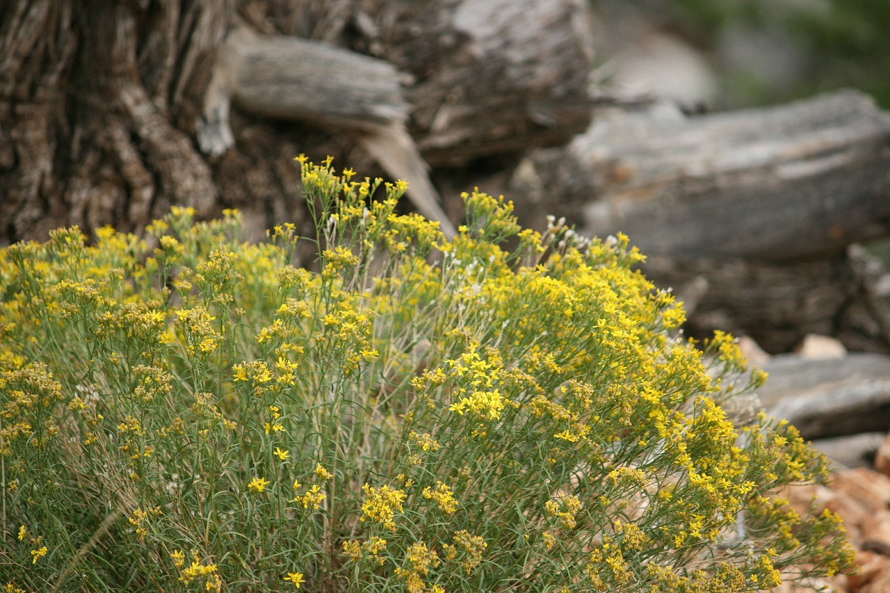 plant yellow desert free photo