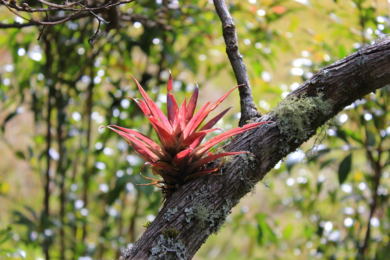 plant nature tribe free photo