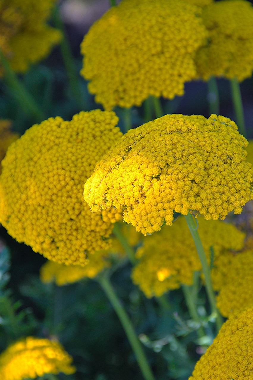 Plantyellowflowernatureplants Free Photo From Needpix