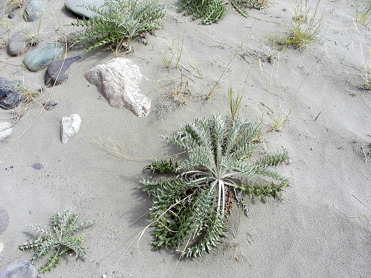 plant sand nature free photo
