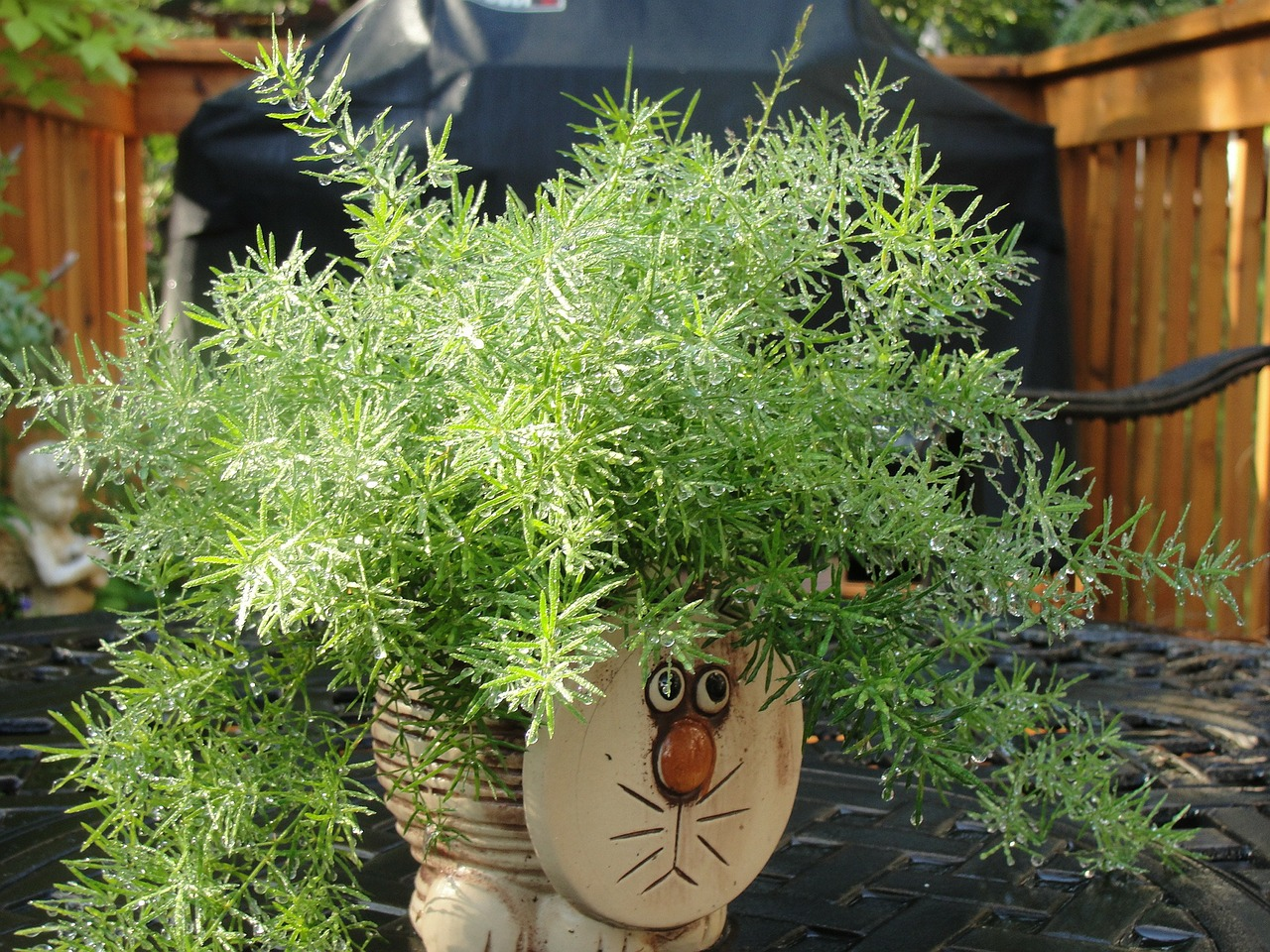 plant cat pot free photo