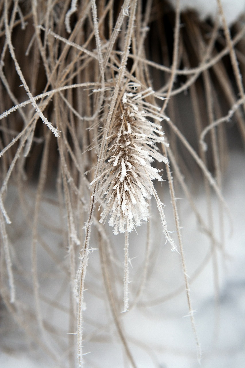 plant frozen ice free photo