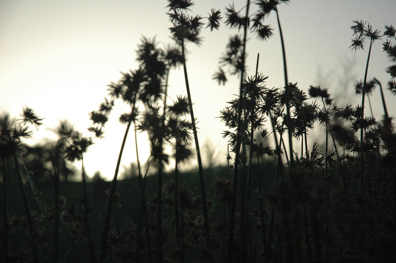 plants silhouettes dark free photo