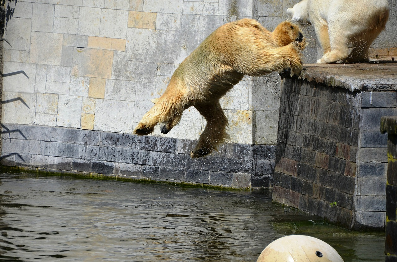 polar bear jump pike jump free photo