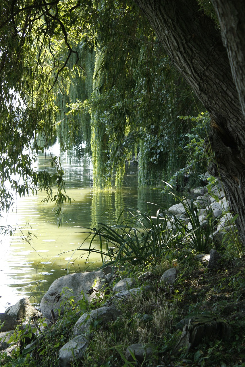 pond,tree,reflection,lipa,the stones,cane,shadows,free pictures, free photos, free images, royalty free, free illustrations, public domain