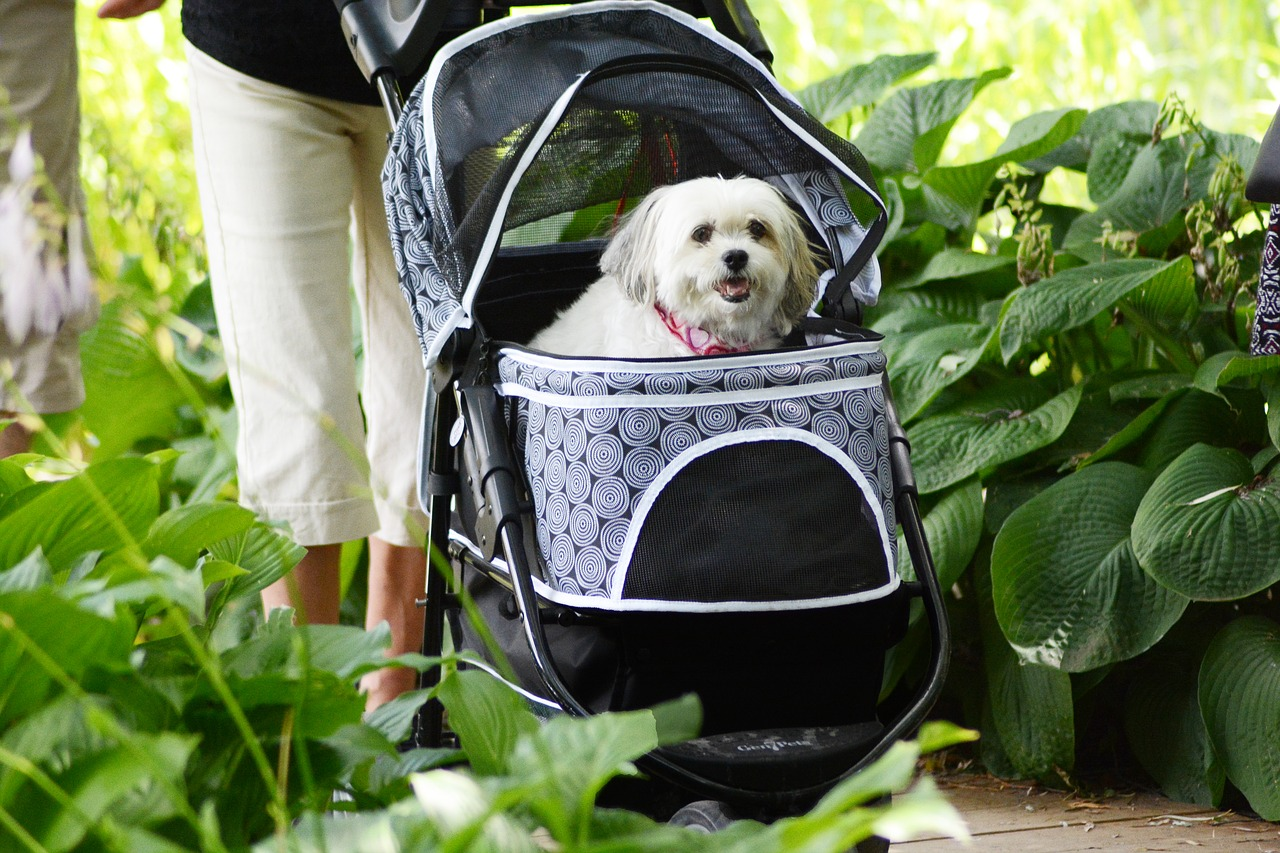 pooch carriage dog domestic free photo