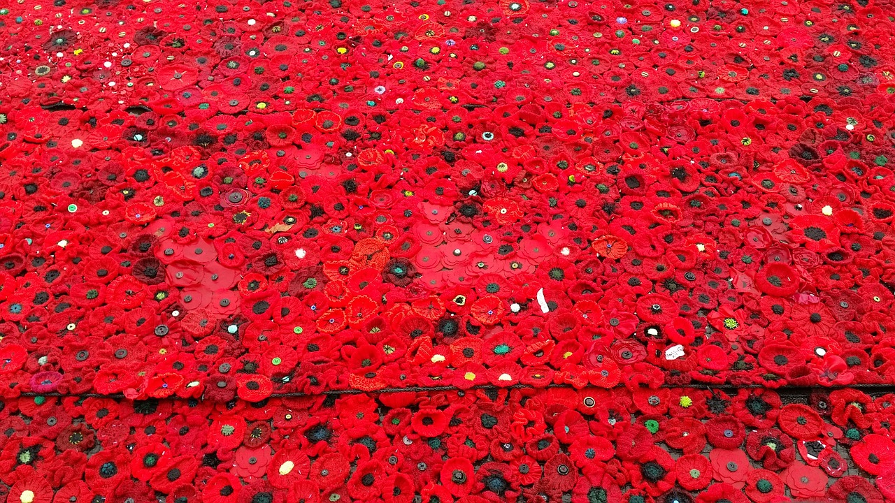 poppy anzac remember free photo