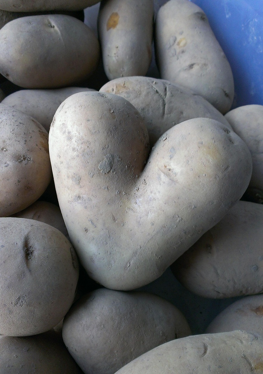 potato heart vegetables free photo