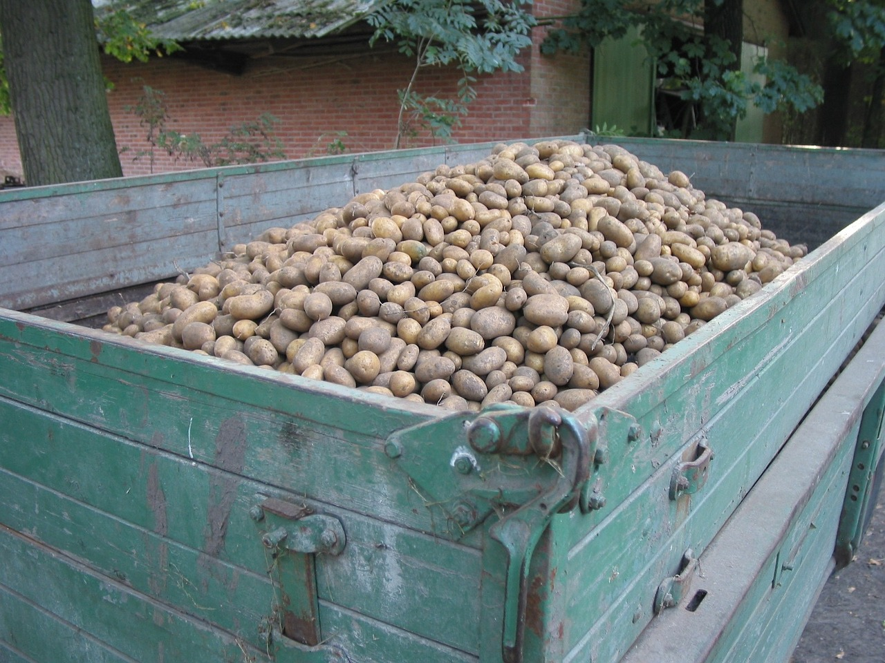 potatoes potato harvest agriculture free photo