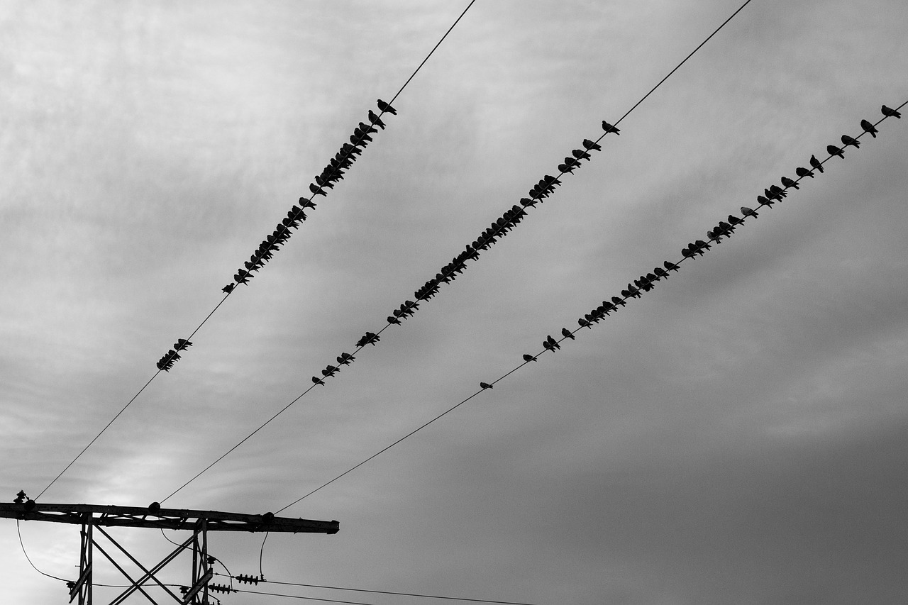 power lines birds sky free photo