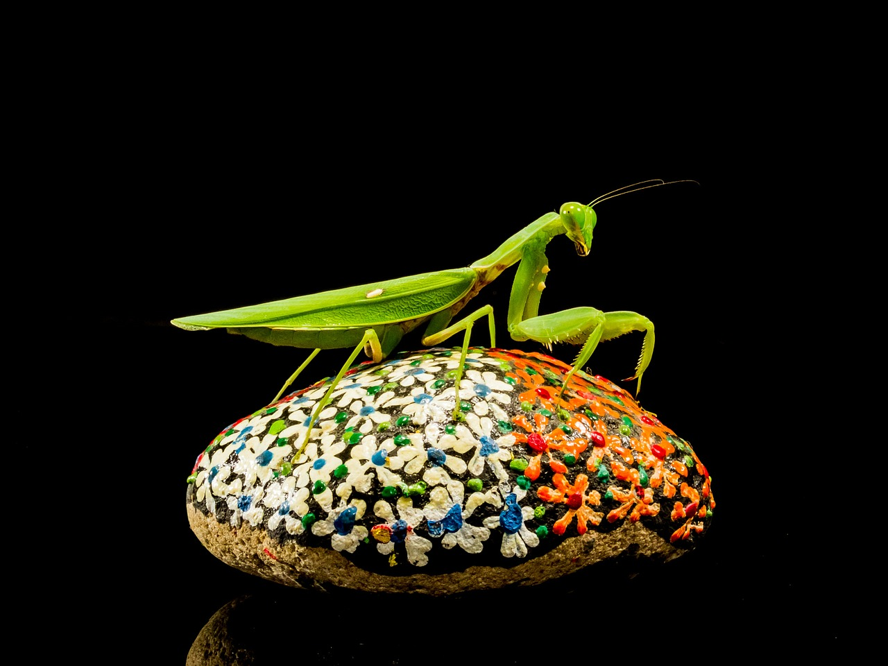 praying mantis fishing locust green free photo