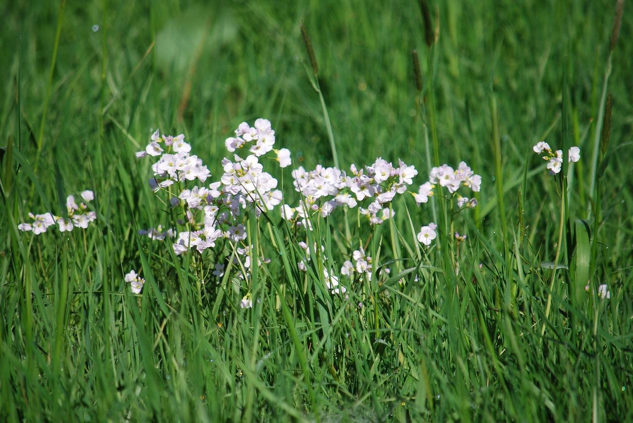 Priairegrassflowersspringfield Free Photo From Needpix