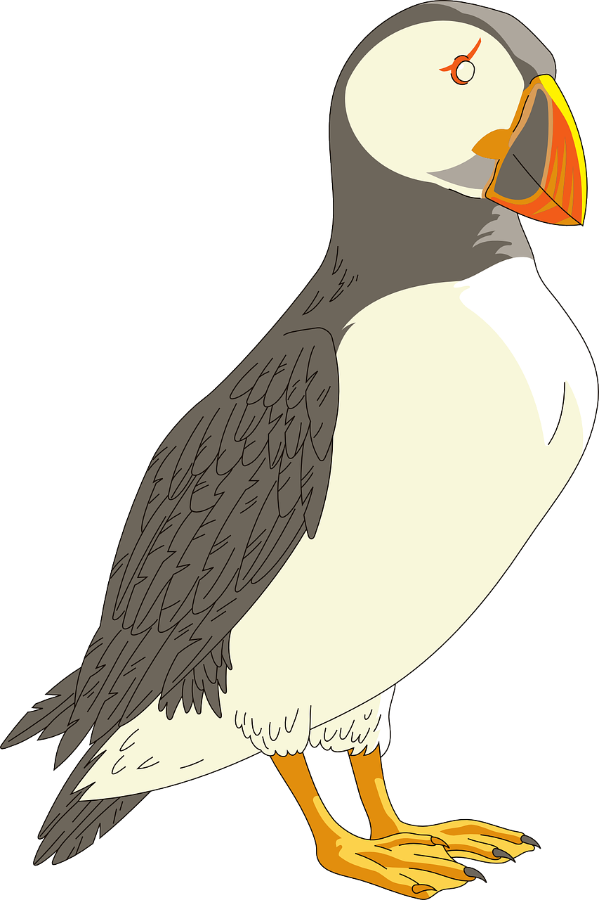 puffin,horned,bird,wings,sad,beak,feathers,free vector graphics,free pictures, free photos, free images, royalty free, free illustrations, public domain