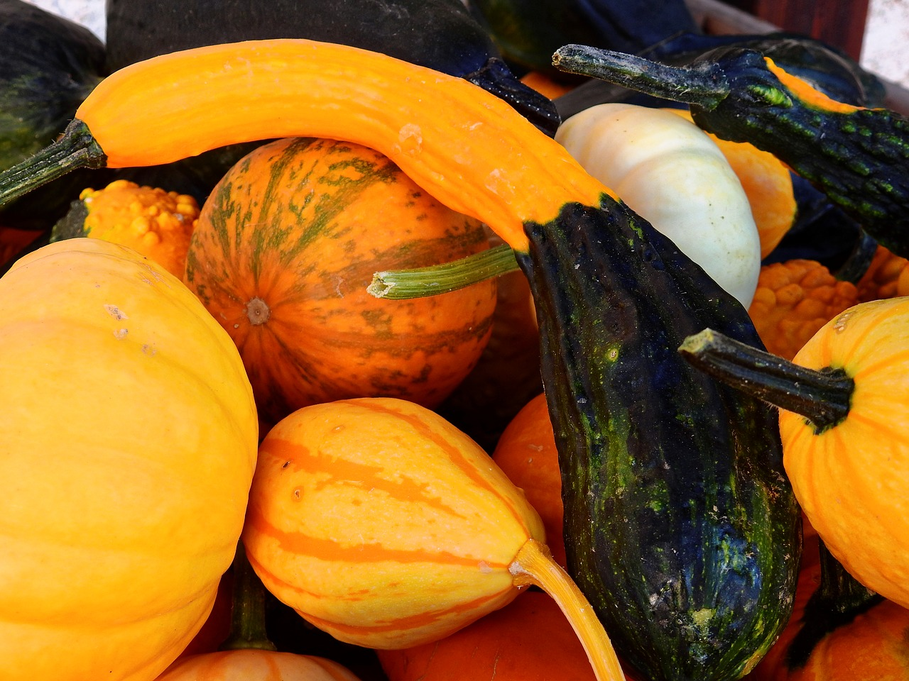 pumpkin gourd autumn free photo