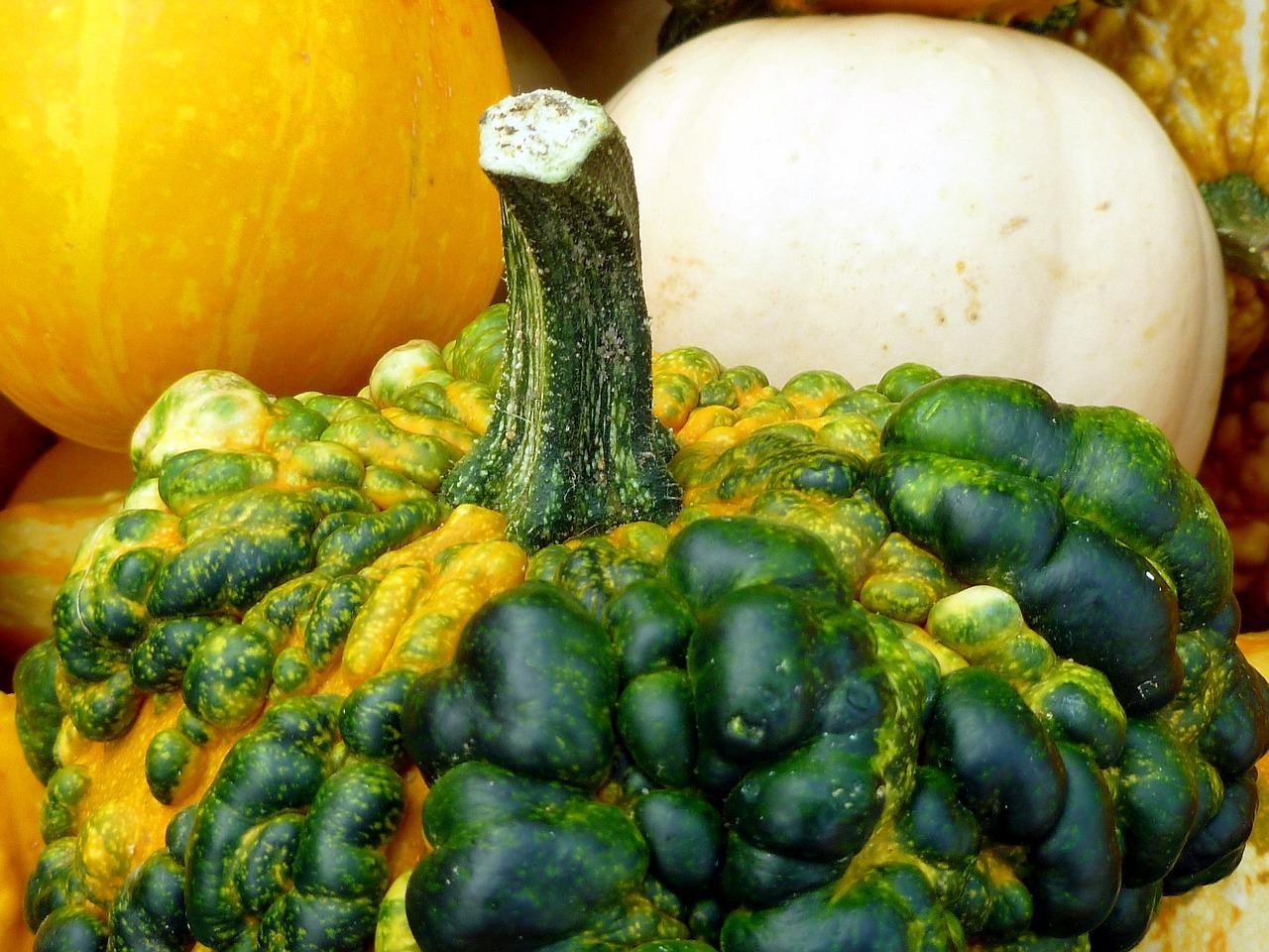 Pumpkin Plant Vegetables Autumn Garden Free Image From Needpix Com