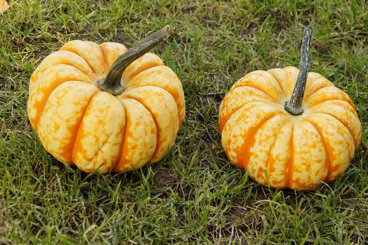 pumpkin gourd pumpkins free photo