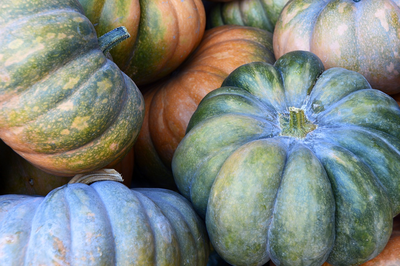 pumpkin  gourd  vegetables free photo