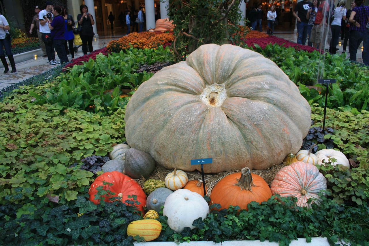 pumpkin vegetables healthy free photo