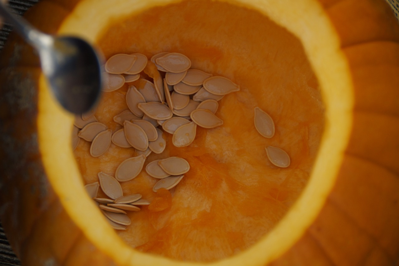 pumpkin seeds pumpkin pumpkins free photo