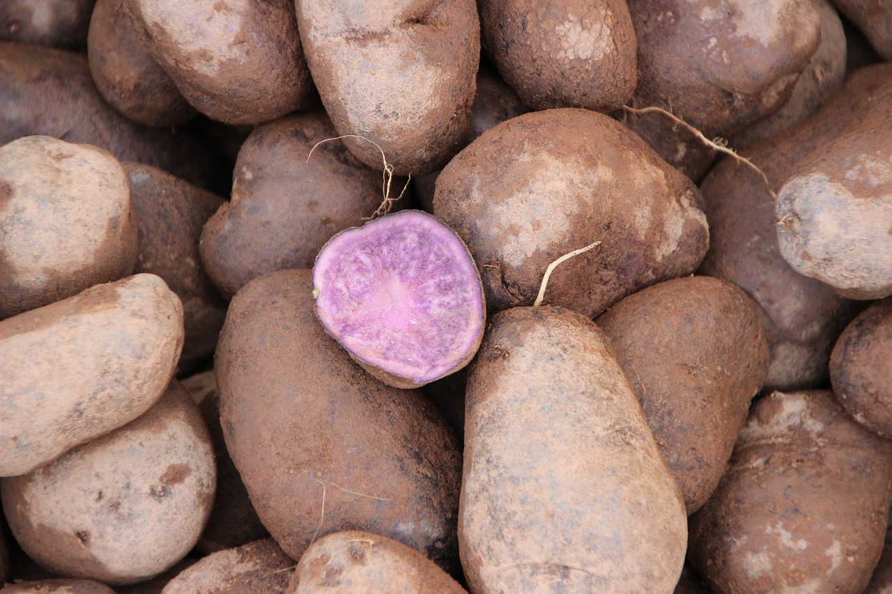 purple potatoes,old potato,staple food,market,food,cook,purple,free pictures, free photos, free images, royalty free, free illustrations