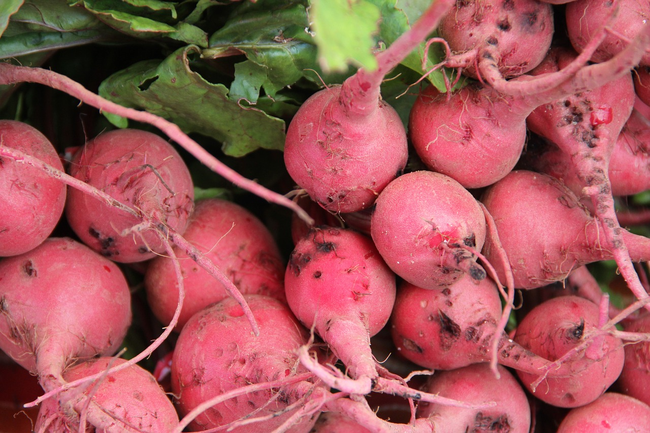 radish radishes vegetable free photo