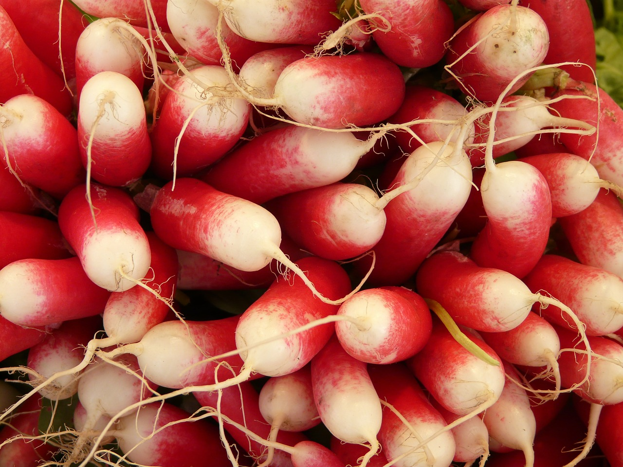 radishes vegetables food free photo