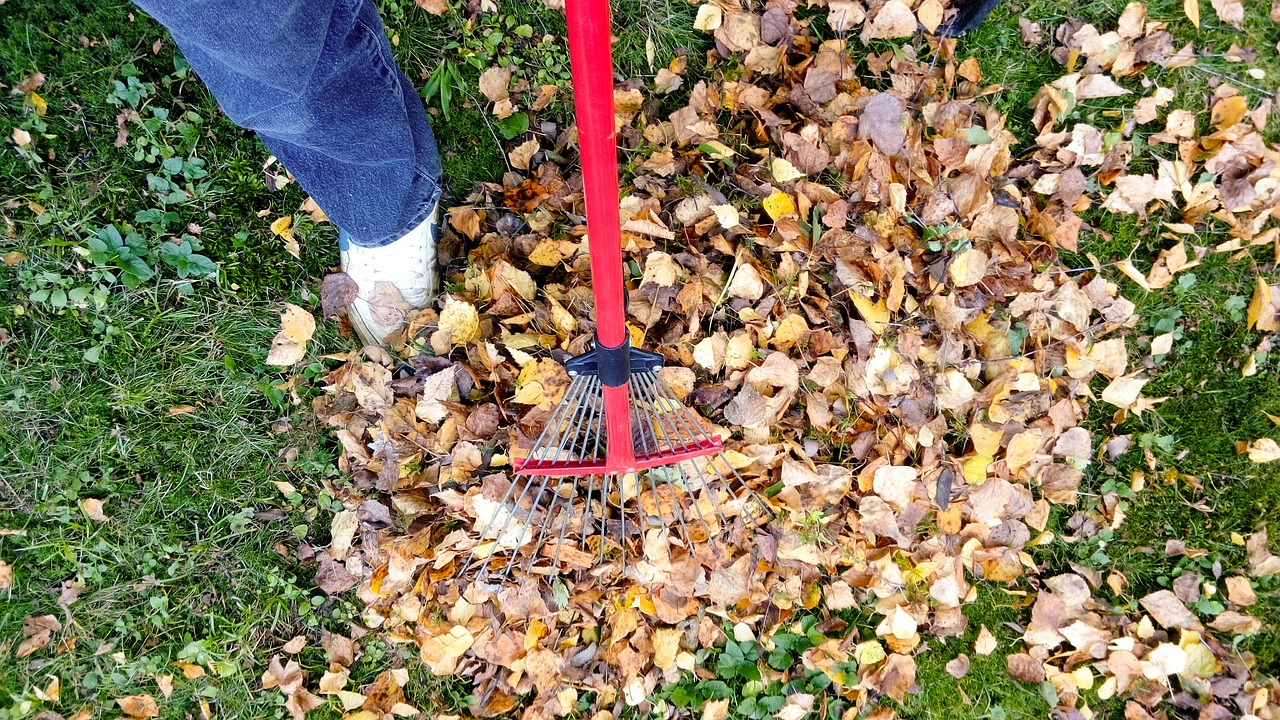 raking,fall,autumn,rake,leaf,garden,season,cleaning,foliage,yard,work,gardening,grass,seasonal,lawn,tool,backyard,pile,heap,yellow,green,october,remove,cleanup,tree,outdoor,orange,nature,leaves,job,november,day,gather,removal,free pictures, free photos, free images, royalty free, free illustrations, public domain