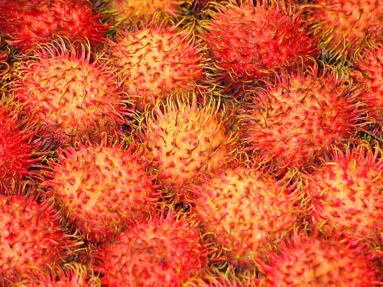 rambutan fruit healthy free photo