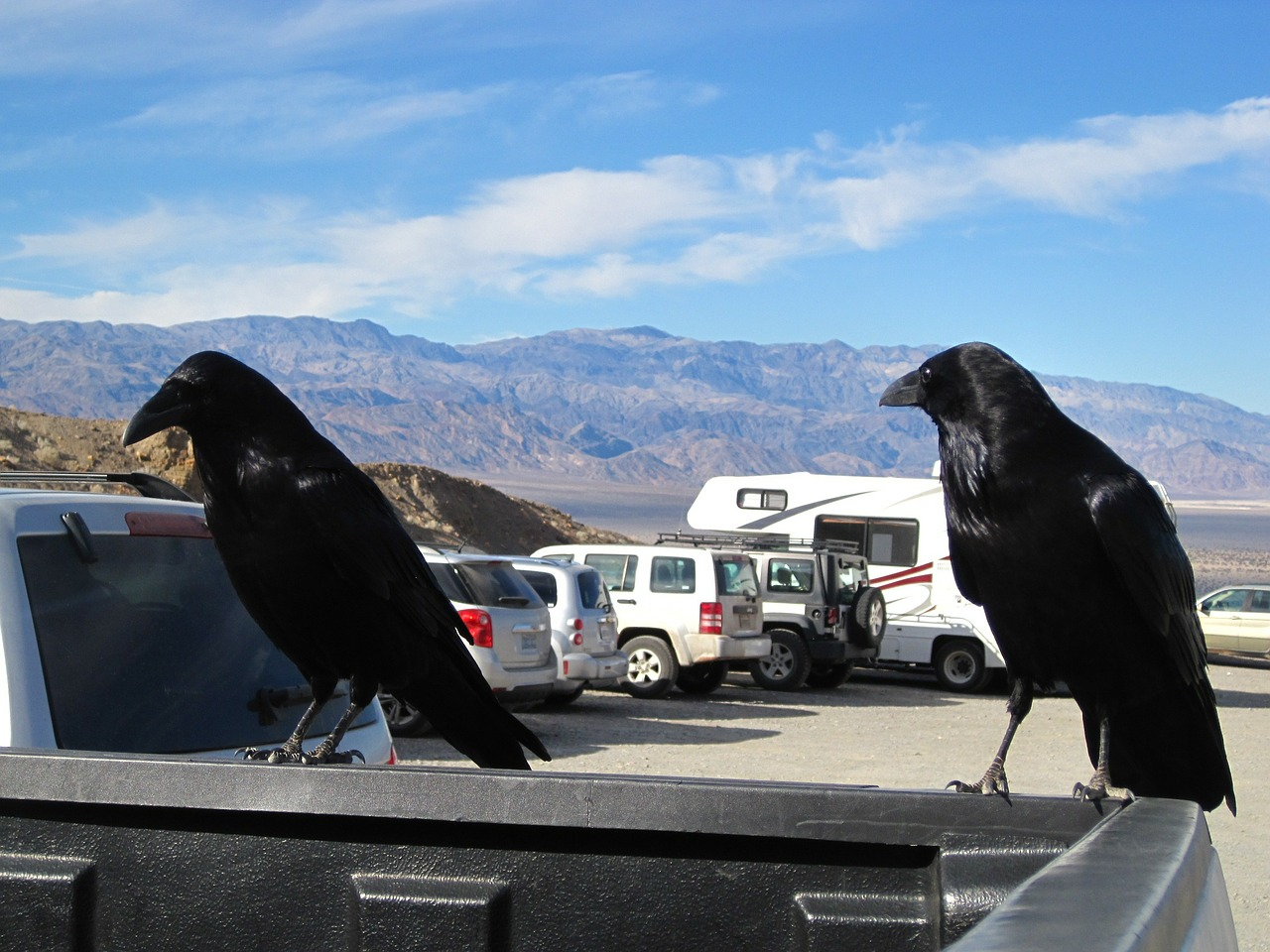 raven death valley bird free photo