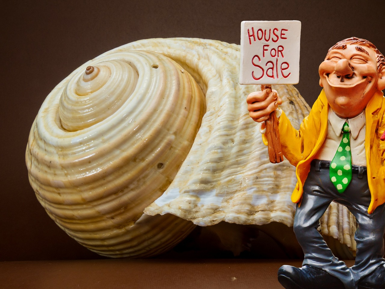 real estate agents shell sell free photo