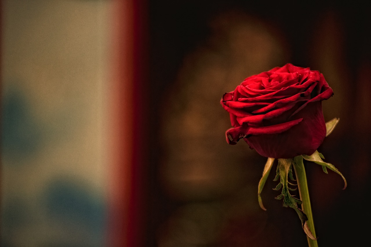 Red,rose,flower,love,romance - free image from needpix.com